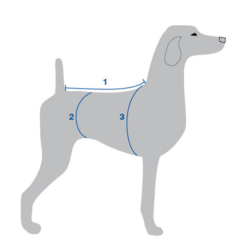 Dog Breed Suits  How to Determine The Dog Breed Suits